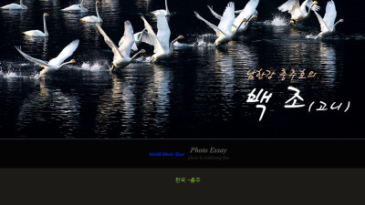 남한강에 고니가 날다.