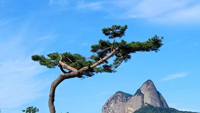 소나무와 마이산
