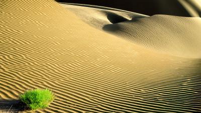 바단지린 사막에서...